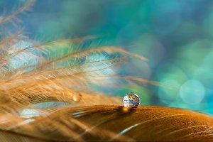 A drop on the golden feather