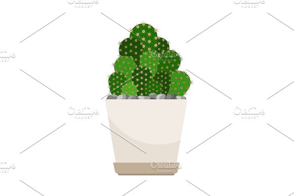 Cactus house plant in white flower pot