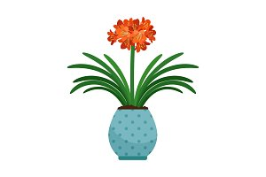 Clivia house plant in flower pot