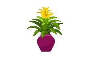 Guzmania house plant in flower pot