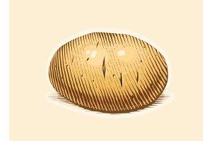Potato. Engraving style vegetable.