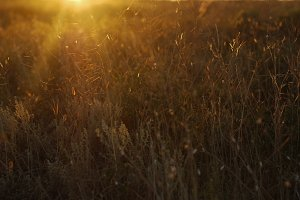 Meadow in sunset light