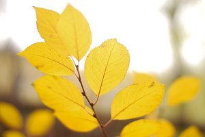 Yellow leaf background