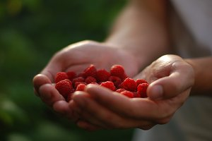 Raspberry in the hands