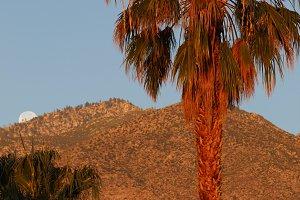 Dawn, Palm Springs, CA