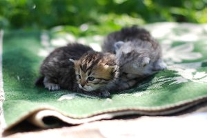 Two kittens in the sunlight