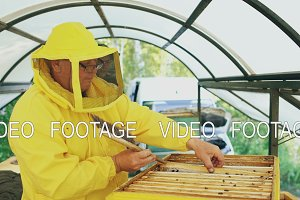 Two beekeepers checking frames and harvesting honey while working in apiary on summer day