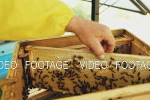 Closeup of beekeeper examining ang cleaning wooden frames in beehive in apiary