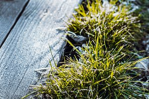 Green grass with snow and sunlight