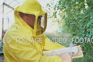 Beekeeper man cut off wax on honeycombs preparing to harvesting honye in apiary