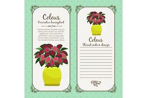 Vintage label with coleus plant