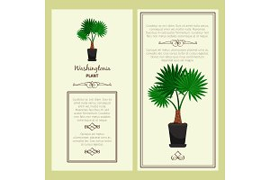 Greeting card with washingtonia plant