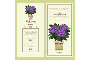 Hydrangea flower in pot banners