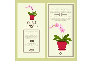 Orchid flower in pot banners