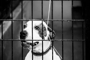 perros entre rejas / dogs behind bar