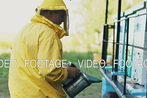 Stedicam shot of Young beekeeper man smoking bees away from beehive in apiary