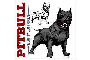 American Pit Bull Terrier, Pitbull.