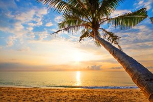 tropical beach in sunrise