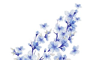 beautiful flowers. watercolor illustration