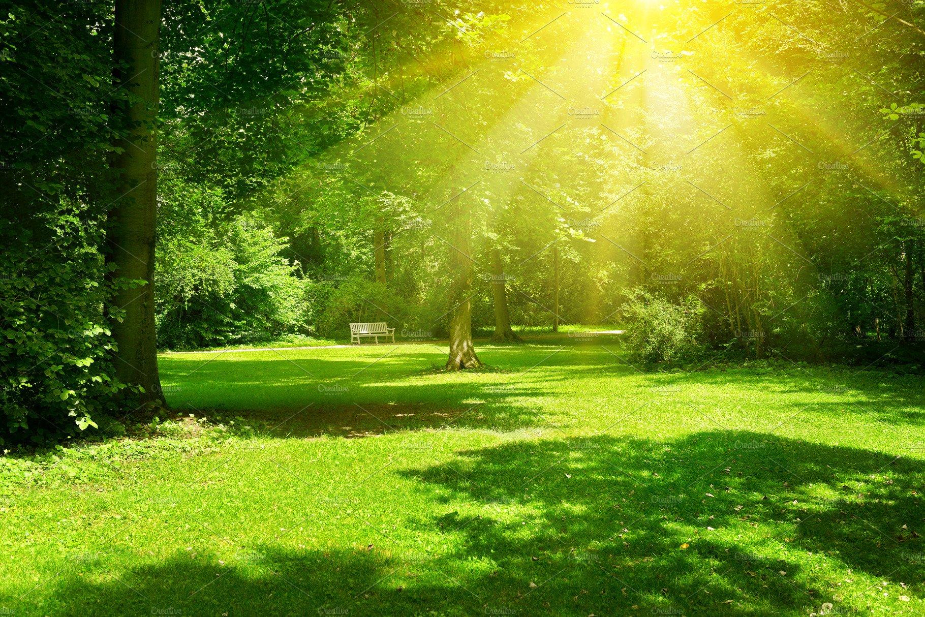 Bright sunny day in park. ~ Nature Photos ~ Creative Market