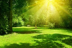 Bright sunny day in park.