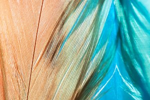 Abstract background with feathers
