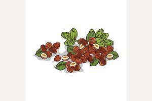 Isolated clipart Hazelnut