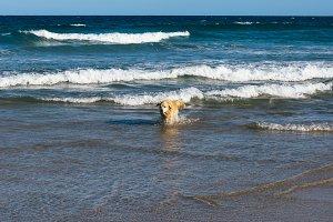 Sunshine beach at Noosa, Sunshine Co
