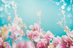 Beautiful pink blossom of magnolia