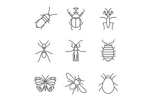 Insects linear icons set