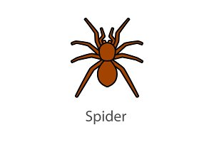 Spider color icon