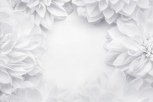 Creative white flowers frame