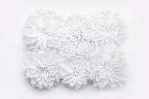 Creative white flowers layout