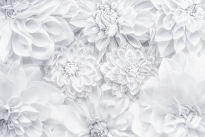 White flowers floral layout