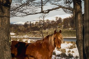 Horse in snow Patagonia