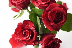 Red fresh roses