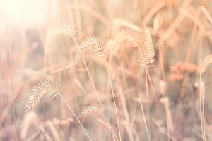 Autumn grass in sunlight.