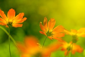 Orange flowers in the sunlight.