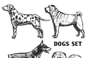 Sketch dogs portrait set