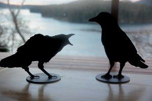 Crow!