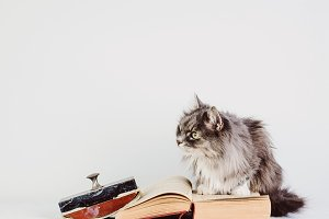 Vintage book and cute cat