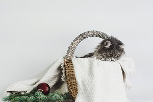 Tender, sweet cat in a wicker basket