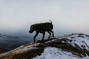 Great Dane on Foggy Mountain