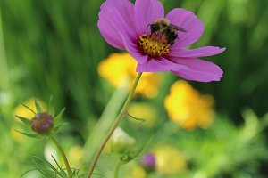 Bee & Purple Flower