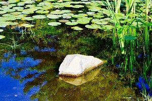 Pond & Lilypads