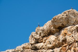 Close-up of stone rock with blue sky above with pigeons