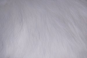 white fur texture full background