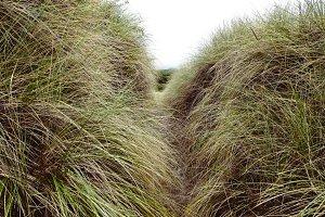 Long Beach Grass