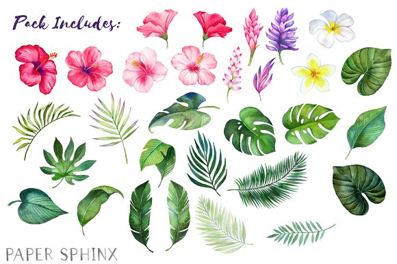 Watercolor Tropical Flowers Clipart Graphics Creative Market