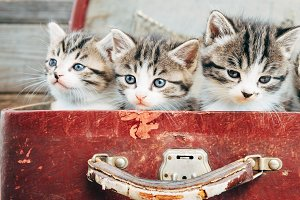 Cute kittens in suitcase